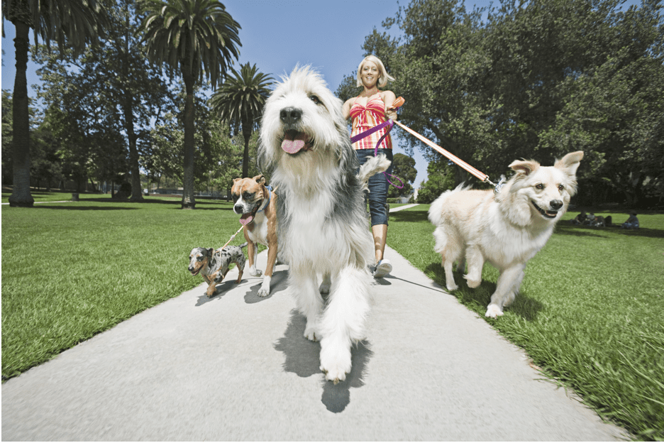 Photo of Professional Dog Walker Waggy Walkys