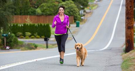 keeping your dog in shape
