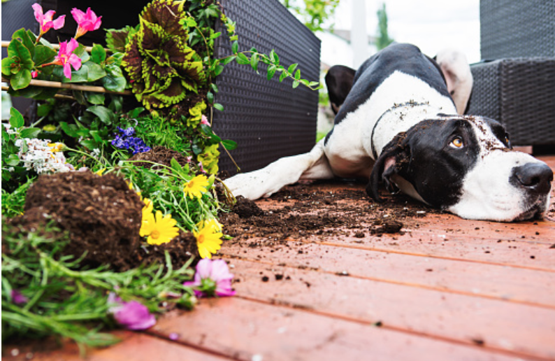 How to Get Your Dog to Stop Digging