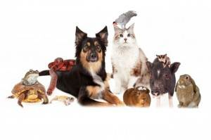 Photo of Assortment of Pets