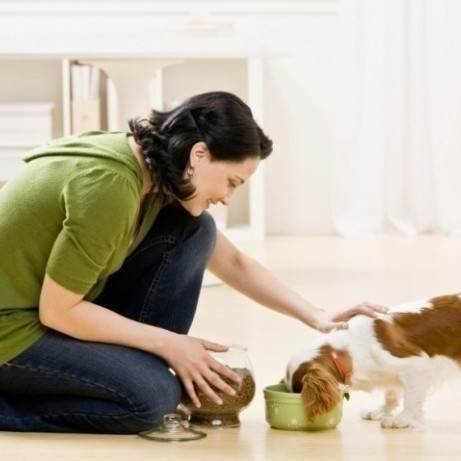 richmond-pet-sitter-feeding-dog-640x461