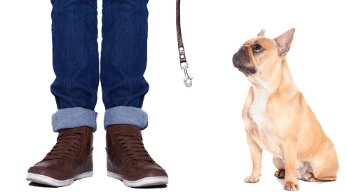 Man with dog and leash