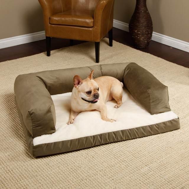 dog pet sitting