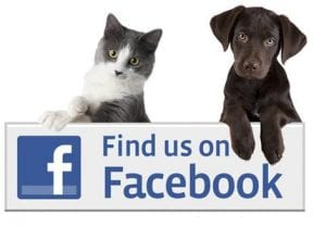 Puppy and Kitten on Facebook