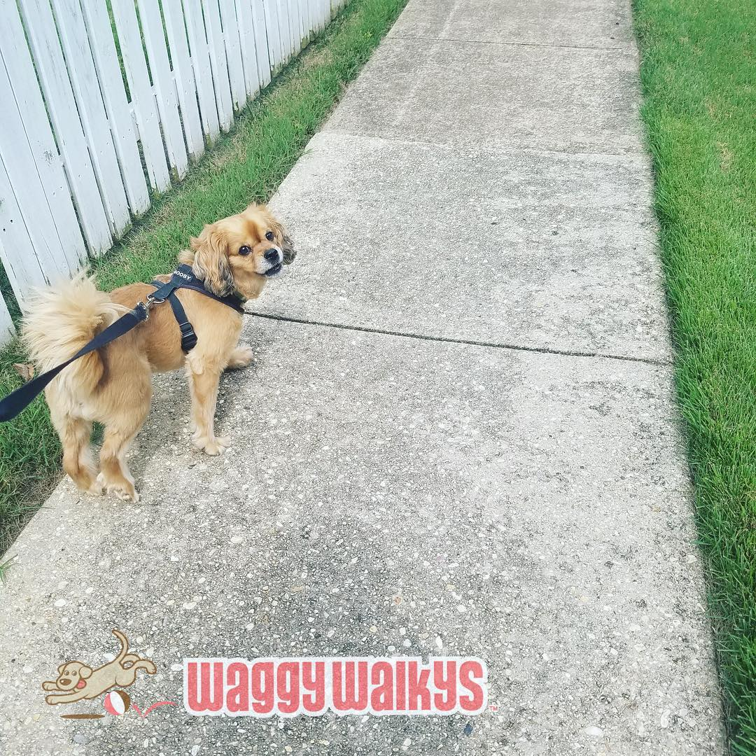 Beautiful Penny Puppy