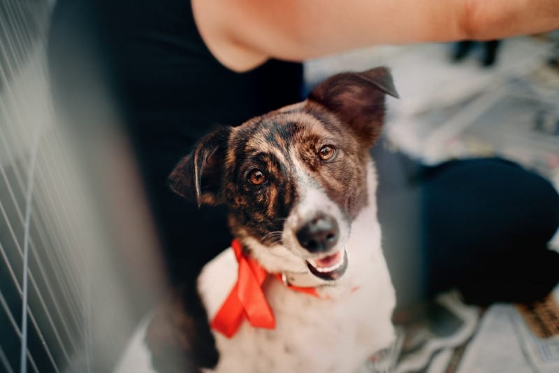 photo-of-adoptable-dog-looking